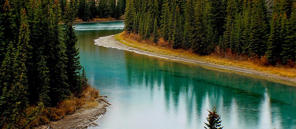 canada rivier bos