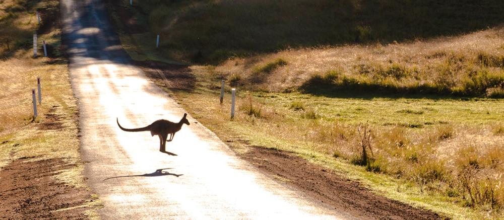 kangoeroe weg
